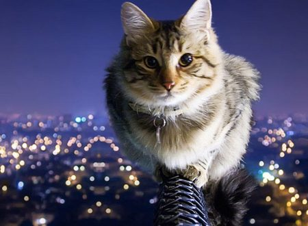 city-night-cat